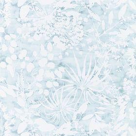 111637 – tapeta Coralline Ocean Anthozoa Harlequin